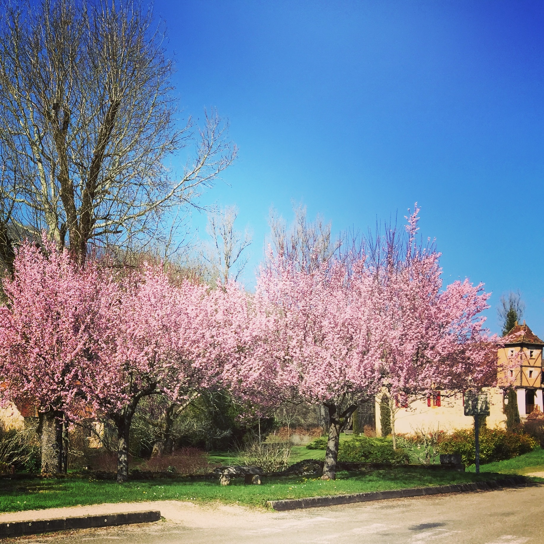 Spring arrives in Gigouzac